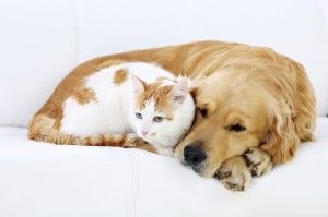 Cat and dog resting together.